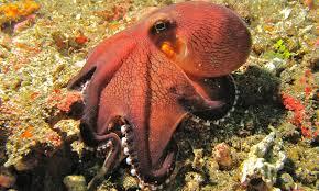 Octopus On Molly