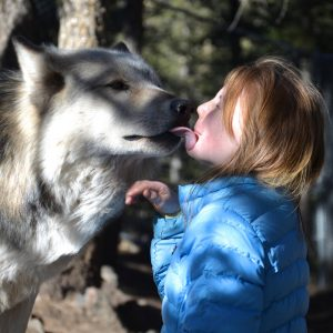Wolves on the Ballot